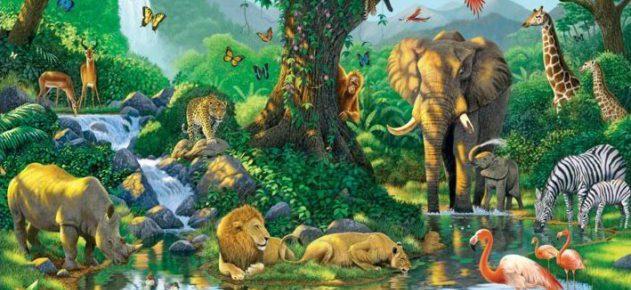 harmony-jungle-i3413